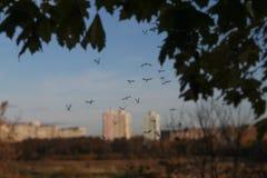 Les moustiques volent au coucher du soleil en automne en retard Images stock