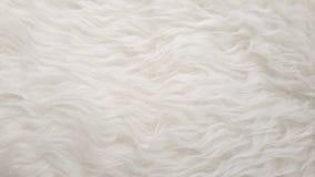 Les moutons plats pelucheux naturels blancs choient les milieux de texture de peau, matériel pour la décoration de maison de tapi Images libres de droits