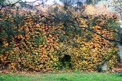 Les murs de l'automne Image stock