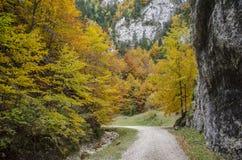 Les murs raides de roche et les couleurs d'automne dans Zarnestiului se gorgent Images libres de droits