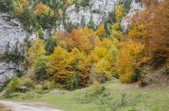 Les murs raides de roche et les couleurs d'automne dans Zarnestiului se gorgent Photo stock