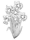 Les narcisses fleurissent le vecteur d'illustration de croquis de bouquet d'isolement par blanc noir graphique Photos stock