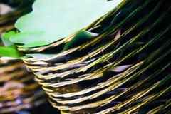 Les nervures de feuille de noix de coco au plat photos libres de droits