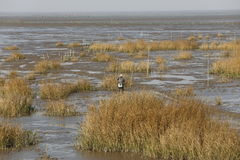 Les niveaux d'eau tombent, des pêcheurs au crochet dans l'estran des produits aquatiques Image stock