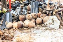 Les noix de coco sèchent Photographie stock libre de droits