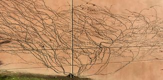 Les nombreux chemins et réseaux des vignes image libre de droits