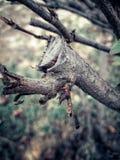Les nouveaux bourgeons Photos libres de droits