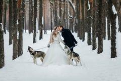 Les nouveaux mariés marchent sur la traînée neigeuse avec le chien de traîneau deux sibérien Vue arrière dessin-modèle Photographie stock