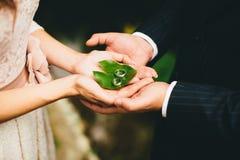 Les nouveaux mariés tiennent des anneaux de mariage sur des mains sur la feuille verte Image libre de droits
