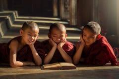 Les novices birmans ou trois prêtres lisent heureusement dans les clas Images stock