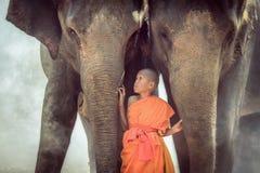 Les novices jouent avec deux éléphants thailand Photos stock