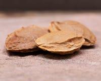 """Les noyaux d'abricot sec la graine d'un abricot, ont souvent appelé une """"pierre """"sur la pierre naturelle Amygdaline Vitamine B17 image libre de droits"""