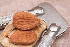 Les noyaux d'abricot sec la graine d'un abricot, ont souvent appel? un casse-noix d'acier inoxydable ?en pierre ?et sur la pierre photos libres de droits