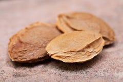 Les noyaux d'abricot sec la graine d'un abricot, ont souvent appel? une ?pierre ?sur la pierre naturelle Amygdaline Vitamine B17 photos stock
