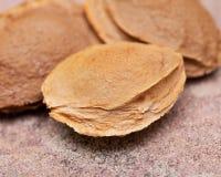 Les noyaux d'abricot sec la graine d'un abricot, ont souvent appel? une ?pierre ?sur la pierre naturelle Amygdaline Vitamine B17 image libre de droits
