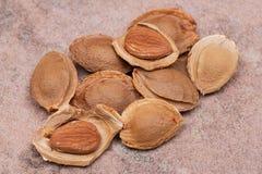 Les noyaux d'abricot sec la graine d'un abricot, ont souvent appel? une ?pierre ?sur la pierre naturelle Amygdaline Vitamine B17 images stock