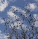 Les nuages, l'arbre, et le ciel Images stock