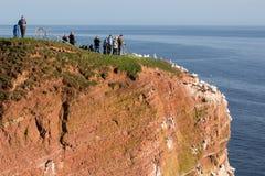 Les observateurs d'oiseau s'approchent des fous de Bassan du nord d'élevage chez Helgoland, Germa Image libre de droits