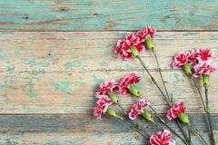 Les oeillets fleurit sur le vieux fond en bois avec l'espace de copie dessus Photographie stock