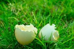 Les oeufs avec coquille blancs avaient haché et puis dessus à l'herbe Image libre de droits