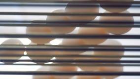 Les oeufs blancs se déplacent le long de la bande de conveyeur en métal dans la vue du côté incliné banque de vidéos