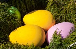 Les oeufs colorés lumineux dans le nid du pin s'embranche Photos libres de droits