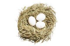 Les oeufs dans l'image de nid avec le chemin de coupure Photographie stock