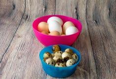 Les oeufs de caille et les oeufs de poulet sont dans des cuvettes en plastique rose et bleu sur une table en bois Photographie stock libre de droits