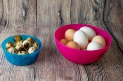 Les oeufs de caille et les oeufs de poulet sont dans des cuvettes en plastique rose et bleu sur une table en bois Images libres de droits