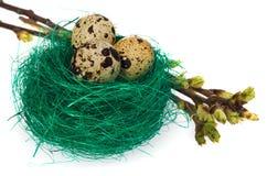 Les oeufs de pâques dans l'oiseau vert nichent avec les brindilles de floraison Photographie stock
