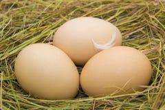 Les oeufs de poule en paille, les agriculteurs frais egg Image stock