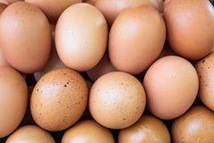 Les oeufs de poulet de Brown se ferment dans la ferme image stock