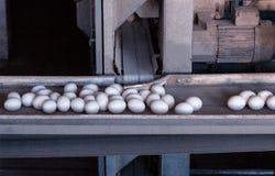 Les oeufs de poulet passent le convoyeur à la ferme avicole, la production des oeufs, ferme moderne image stock