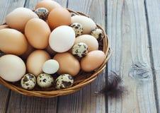 Les oeufs du poulet et des cailles cultivent dans un panier en osier Images libres de droits