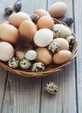 Les oeufs du poulet et des cailles cultivent dans un panier en osier Images stock