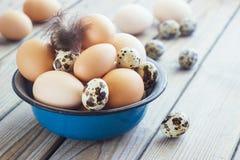 Les oeufs du poulet et des cailles cultivent dans une cuvette en métal Photographie stock
