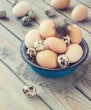 Les oeufs du poulet et des cailles cultivent dans une cuvette en métal Photographie stock libre de droits