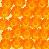 Les officinalis oranges et jaunes de Calendula fleurit (souci de pot, ocres rouges, souci commun, souci de jardin), fond de textu Images stock