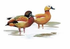Les oies s'assemblent la natation sur l'illustration de vecteur d'aquarelle d'étang Photo libre de droits