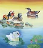 Les oies s'assemblent la natation sur l'illustration de vecteur d'aquarelle d'étang Image libre de droits