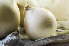 Les oignons blancs détaillés sur le papier - fermez-vous vers le haut du macro tir Image libre de droits