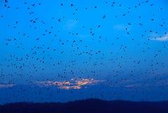Les oiseaux Image libre de droits