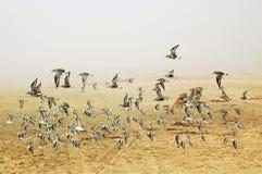 Les oiseaux Photo libre de droits