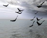 Les oiseaux Photos libres de droits