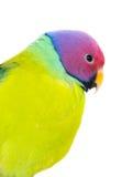 Les oiseaux colorés exotiques Image libre de droits