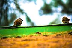 Les oiseaux couplent le rabattement Photos libres de droits