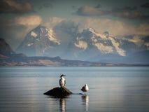 Les oiseaux dans la côte avec des montagnes au tehe basent Photographie stock libre de droits