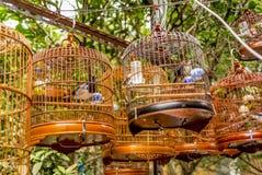 Les oiseaux dans les cages accrochant à l'oiseau font du jardinage - 13 Images stock
