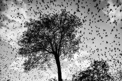 Les oiseaux de Hitchcock Photo libre de droits