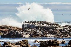 Oiseaux se reposant sur la roche Image libre de droits